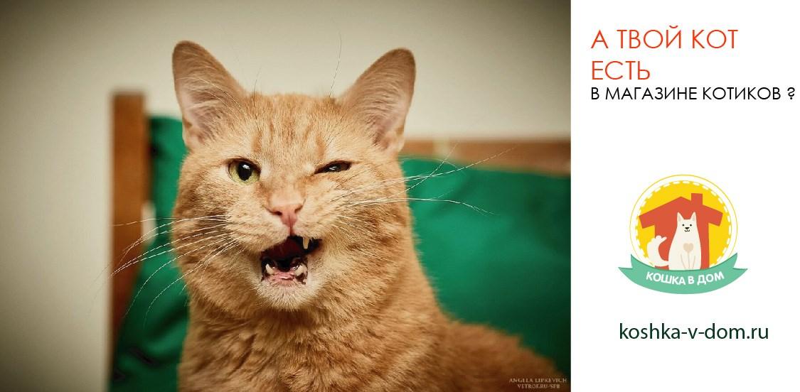 твой кот есть в магазине?