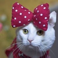 Кошки ищут дом