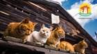 Заочная выставка кошек открывается!