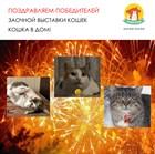 Поздравляем призеров Заочной выставки кошек!