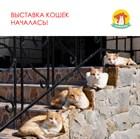 8-я выставка кошек КОШКА В ДОМ открыта!