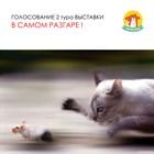 2 тур Заочной выставки кошек КОШКА В ДОМ начинается!