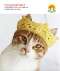 Мы объявляем победителей 8-й выставки кошек КОШКА В ДОМ!