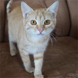 Кошка КЕЙТ - фото 10717