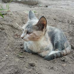 Кошка МАША - фото 10752