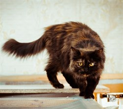 Кошка ВИККИ - фото 4554