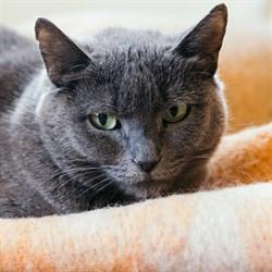 Кошка ШАНЕЛЬ - фото 4655
