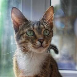 Кошка МАНЯ - фото 4703