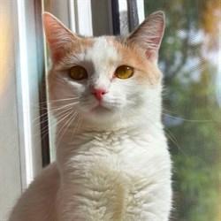Кошка ТАСЯ - фото 4705