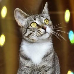 Кошка БУСИНКА - фото 4707