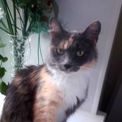 Кошка ПЕППИ - фото 4731
