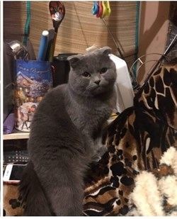 Кот на Варейкиса - фото 4792