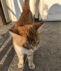 Кот Васька - Рыбацкий  - фото 4796
