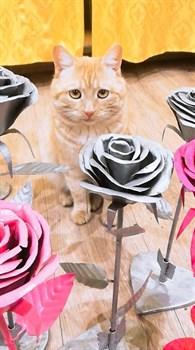 Кот на Шолмова - фото 4800