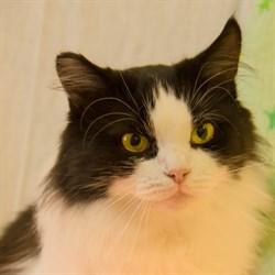 Кошка МАЛЫШКА - фото 4883