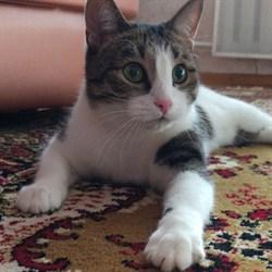 Кошка ФРОСЯ - фото 4900