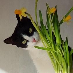 Кошка МИМИНО - фото 4916