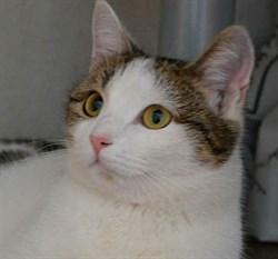 Кошка СНЕЖА - фото 4936