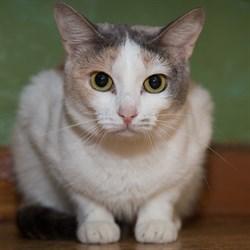 Кошка ДАНА - фото 4943
