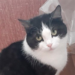 Кошка КЕРРИ - фото 4953