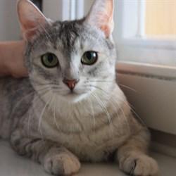 Кошка ШАНЕЛЬ - фото 4955