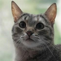 Кошка МАША - фото 4971
