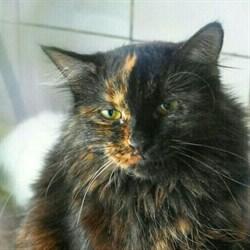 Кошка ТАЙРА - фото 4987