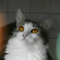 Кошка АТЯ - фото 4991