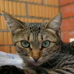 Кошка МАША - фото 4999