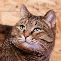 Кошка ЭНДЖИ - фото 5012