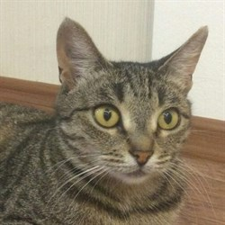 Кошка МУРА - фото 5014