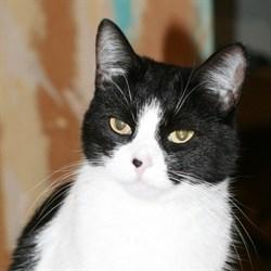 Кошка СОНЕЧКА - фото 5016