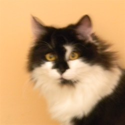 Кошка КЛЯКСА - фото 5020