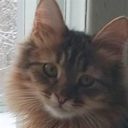 Кошка МУСЕЧКА - фото 5044