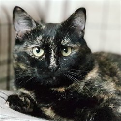 Кошка НЮША - фото 5046