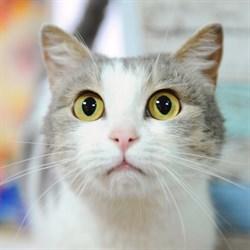 Кошка ЭЛИС - фото 5055