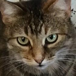 Кошка ДИНА - фото 5059