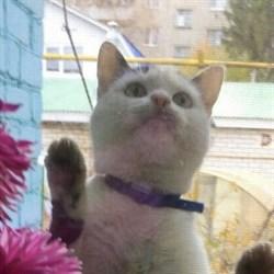 Кошка ЕВА - фото 5061