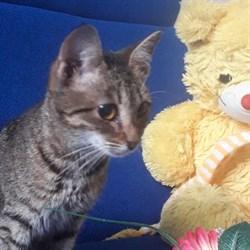 Кошка КСЮША - фото 5069