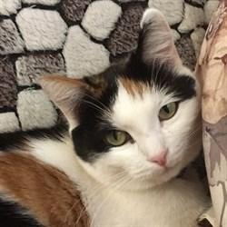 Кошка ЛИЗА - фото 5080