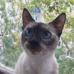 Кошка ФРЕЯ - фото 5082