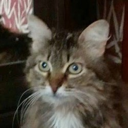 Кошка СОФИ - фото 5104