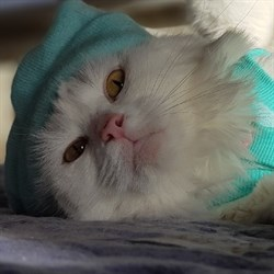 Кошка РУСЕНЬКА - фото 5111