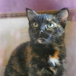 Кошка БИАТРИСС - фото 5125