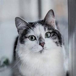Кошка ЛУЛУШЕЧКА - фото 5139