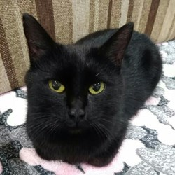 Кошка ЗАРА - фото 5181