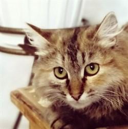 Кошка МУСЕЧКА - фото 5189