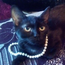 Кошка АНФИСА - фото 5191