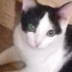Кошка КИРА  - фото 5196