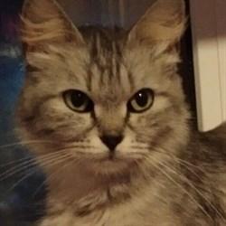 Кошка ДЭЯ - фото 5263